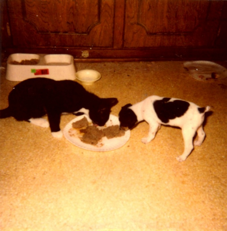 Here is a bonus picture of Oliver, the railroad travelin' kitten, sharing a treat of some kind with Corky, my rat terrier puppy.